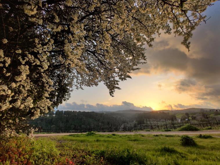 יקב הרי גליל - כרמים (צילום: יובל דקס)