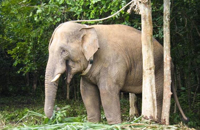הפיל ת'אנג  (צילום: רשתות חברתיות)