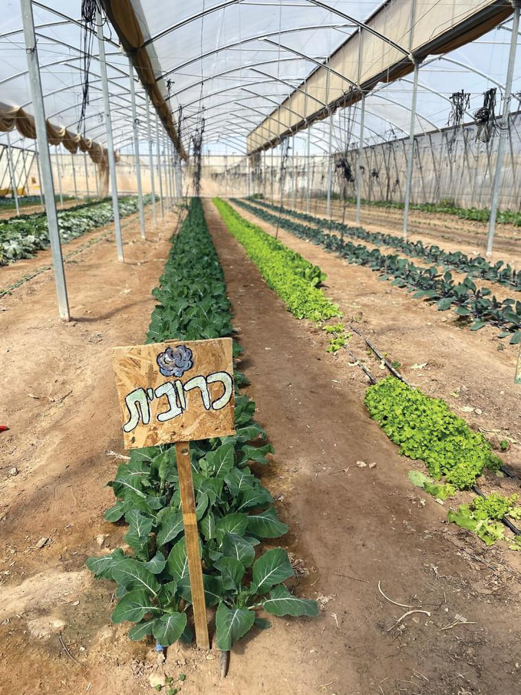 חוות בין השיטים (צילום: מיטל שרעבי)