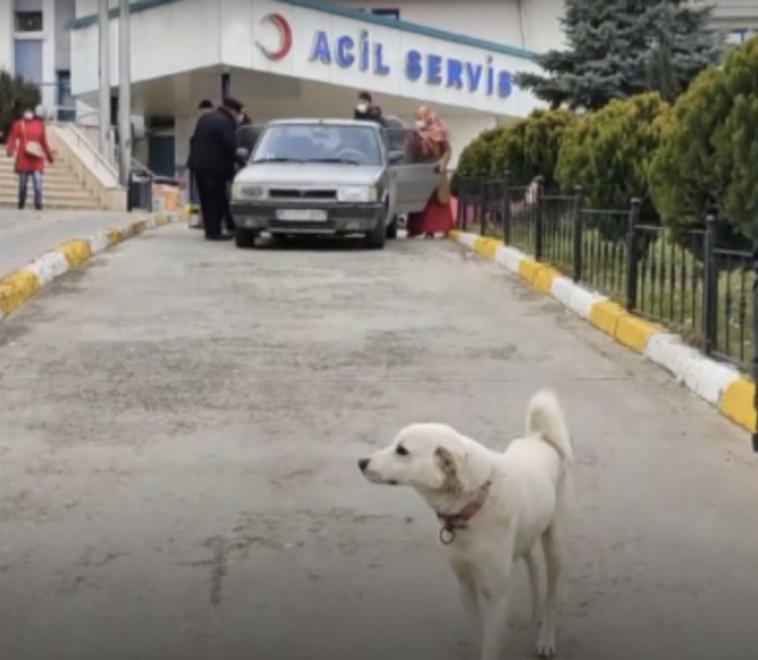 פמוק הכלב מחוץ לבית החולים בטורקיה (צילום: רשתות חברתיות)
