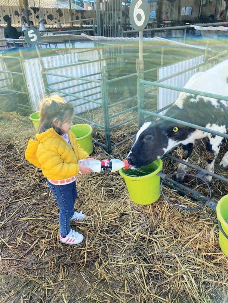 שביל פרות החלב  (צילום: רוני דרוקר)