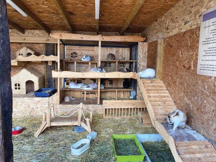 חוות הארנבים (צילום: מיטל שרעבי)