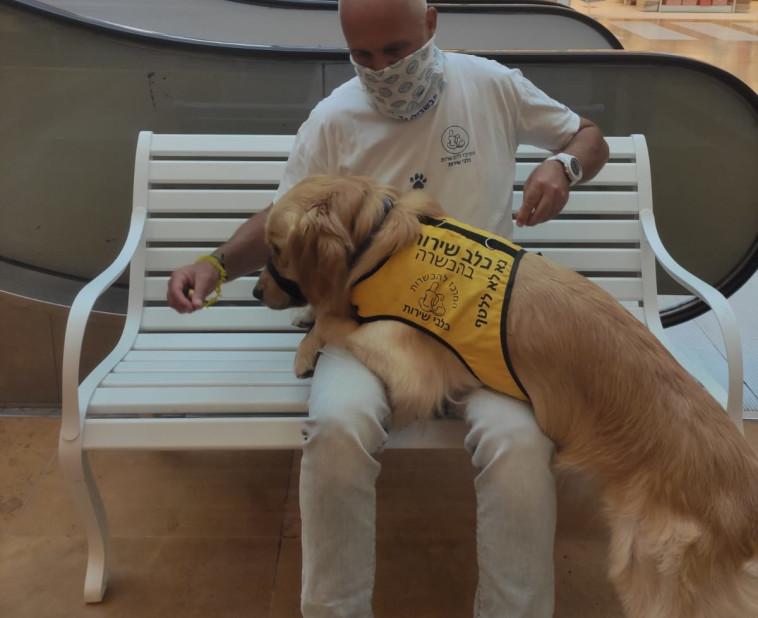 תרגיל בהכשרת כלבי שירות (צילום: המרכז להכשרת כלבי שירות)