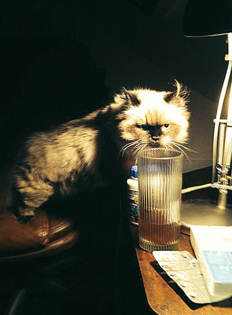 החתול ישמעאל (צילום: רון מיברג)