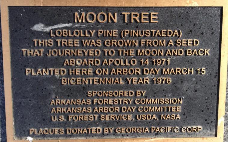 שלט שהוצב ליד אחד העצים  (צילום: Jesse Berry)