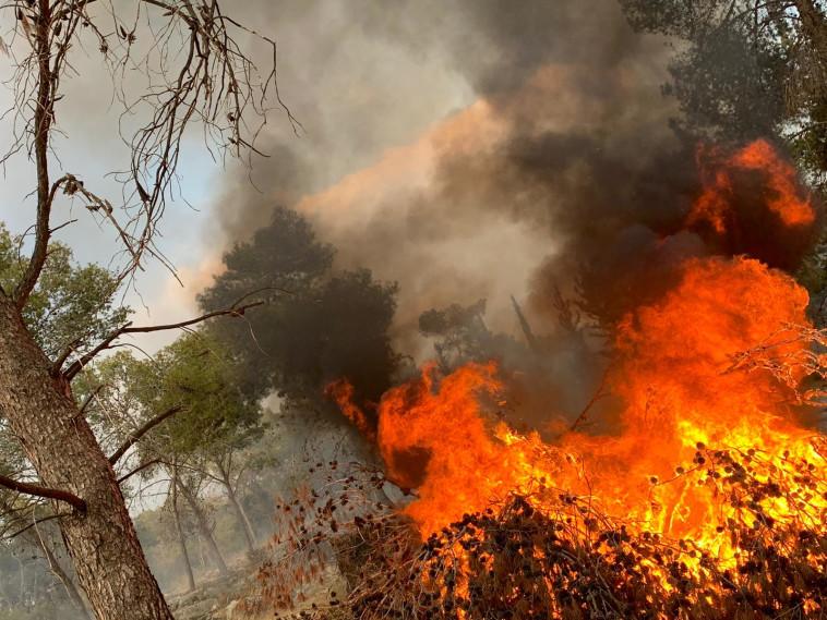 להבות השריפה ביער קולה (צילום: דוברות כיבוי והצלה)