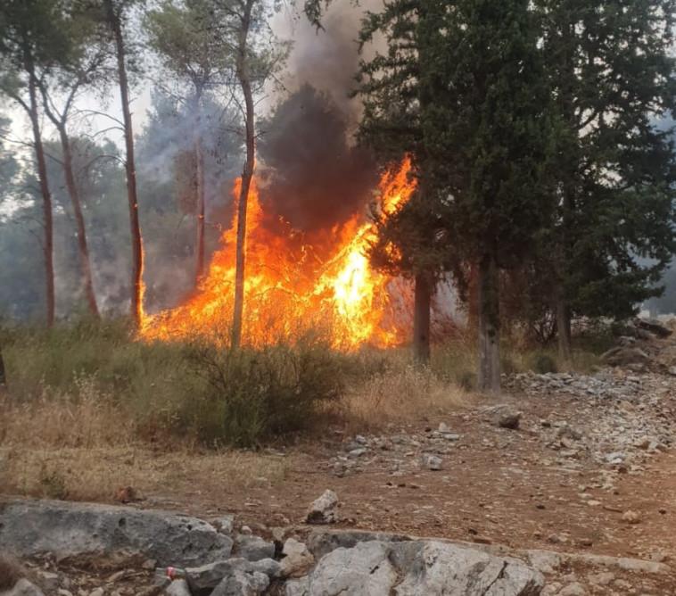 השריפה ביער קולה (צילום: דוברות כיבוי והצלה)
