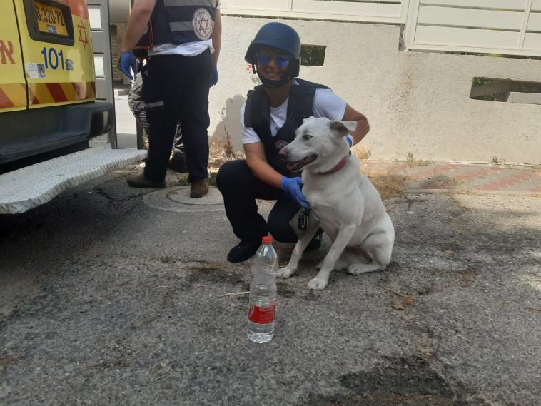 צוותי מד''א מעניקים טיפול לכלב בזירת נפילה באשקלון (צילום: ברוך הרשקוביץ דוברות מד''א)