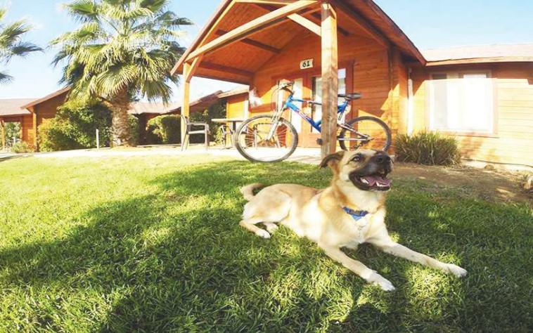 Dog in a hotel (Photo: PR Hotels Travelers)