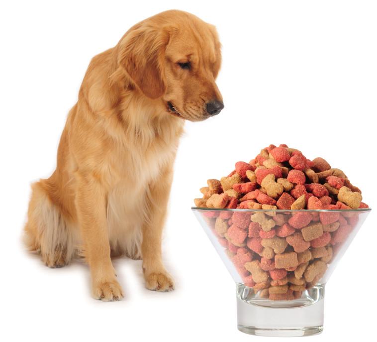 מזון יבש לכלב (צילום: אינגאימג')