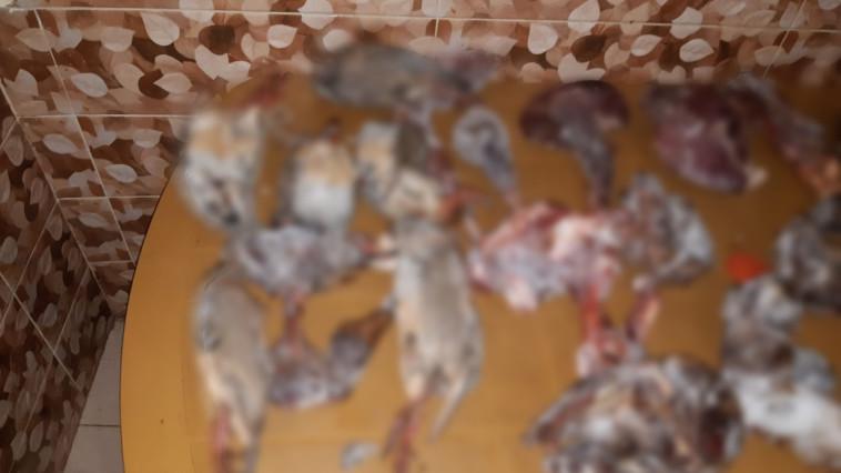 חתיכות בשר מבותר של צבי ישראלי וחוגלות שנתפסו ביום המעצר של הנאשם (צילום: פקחי רשות הטבע והגנים ביחידת קמ''ט שמורות טבע במינהל האזרחי)