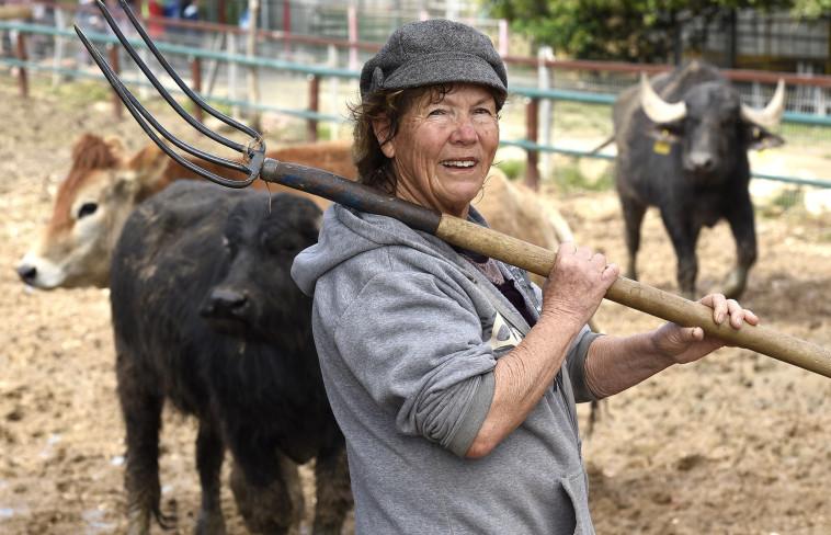 החווה של חווה בקיבוץ חפץ חיים (צילום: ראובן קסטרו)