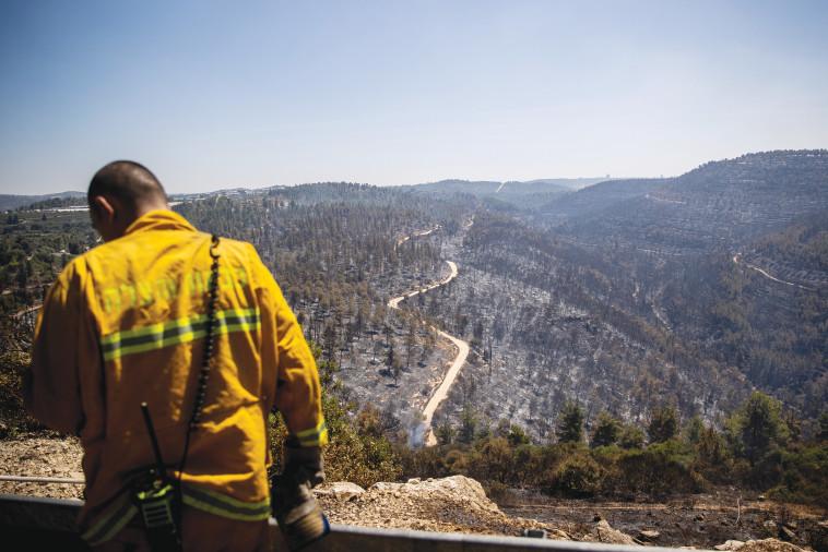 כבאי בשריפה בהרי ירושלים (צילום: יונתן זינדל, פלאש 90)