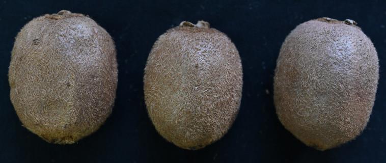 מצבי ההבשלה השונים של הקיווי - מבט מבחוץ