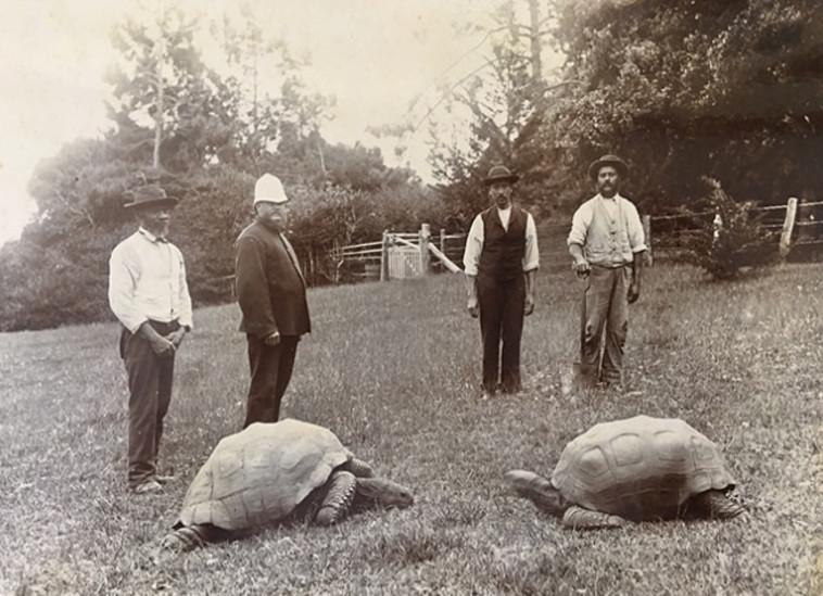 הצב ג'ונתן בין השנים 1882-1886 (צילום: Guinness World Records)