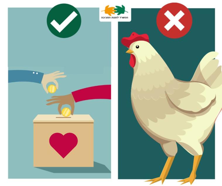 לא להשתמש בתרנגול לכפרות (צילום: המשרד להגנת הסביבה)