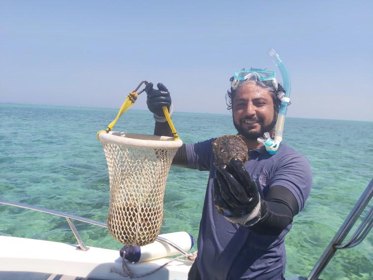 Muhammad Shula shells with pearls (Photo: Moshe Cohen)