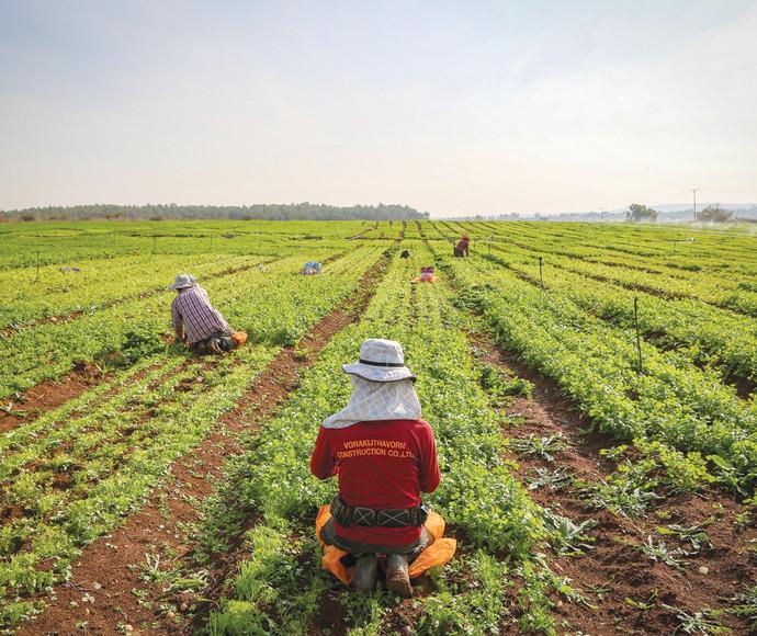 חקלאים באזור בית שמש