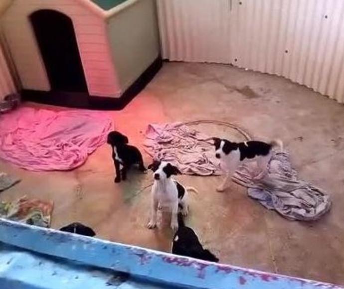 כלבלבים שננטשו