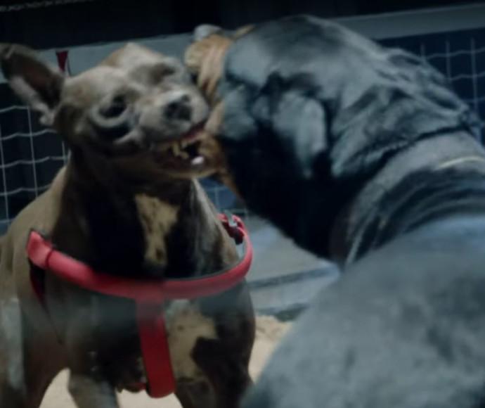 קרב כלבים בסדרה ג'ודה