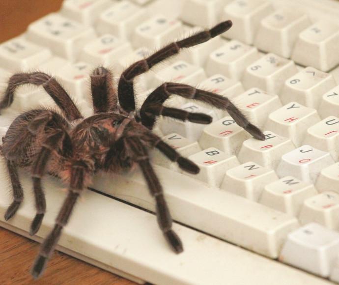 עכביש, אילוסטרציה