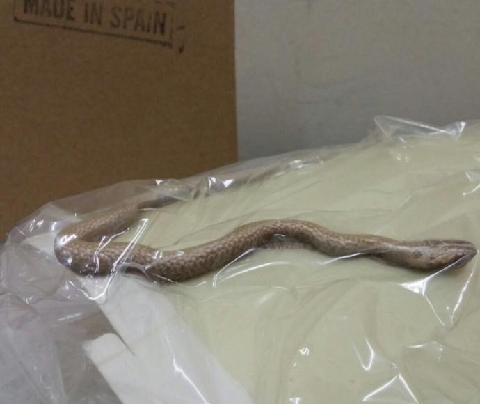 הנחש שנלכד במרפאה בבאר שבע