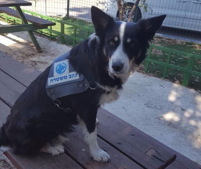 ספידי הכלבה המשטרתית