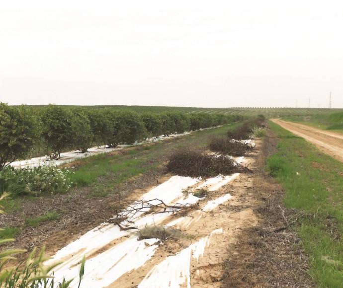 טוב מאוד מלחמתם של החקלאים במטיילים שרומסים את שדותיהם | מעריב BK-72