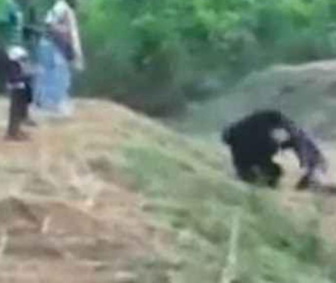 נטרף בידי דוב