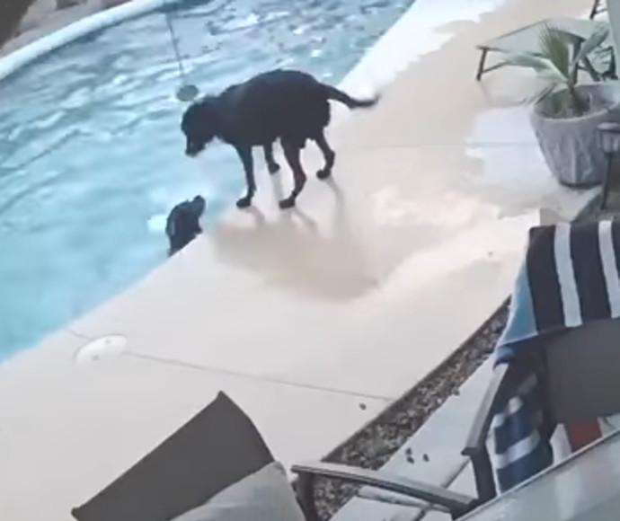 כלב הציל את חברו