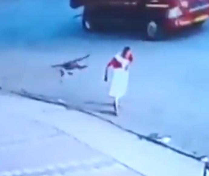 קופים תוקפים בהודו