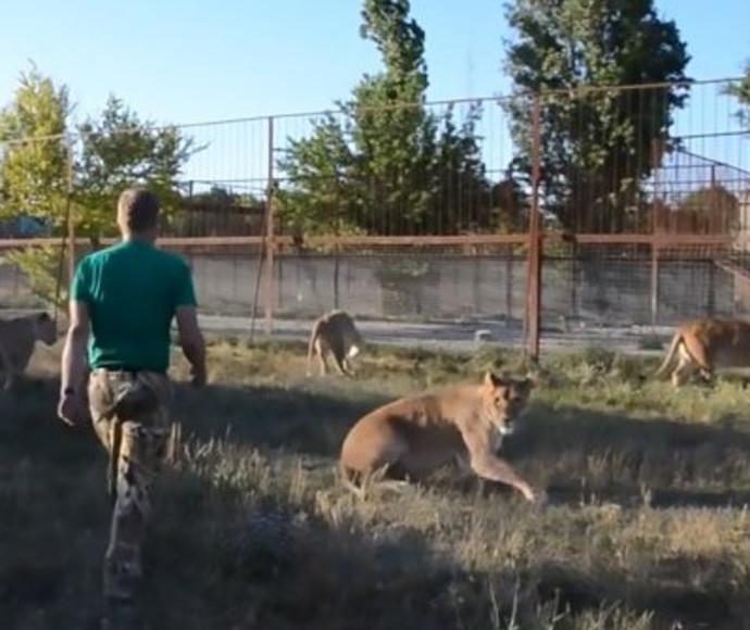 הבריח אריות עם כפכף
