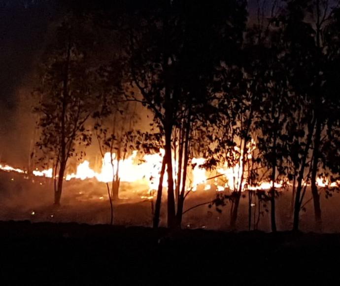 שריפה ביער בארי