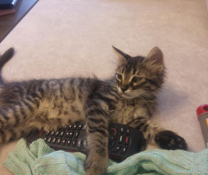 """החתול """"ג'ורדי"""""""
