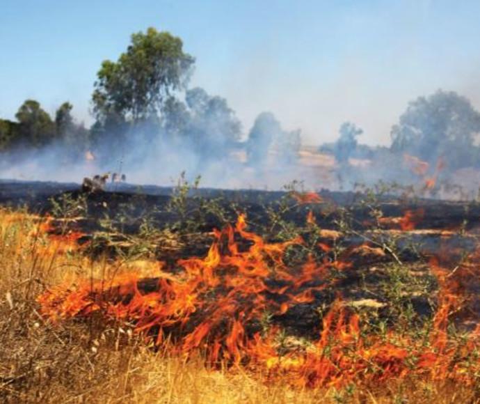 שדות כיסופים עולים בלהבות
