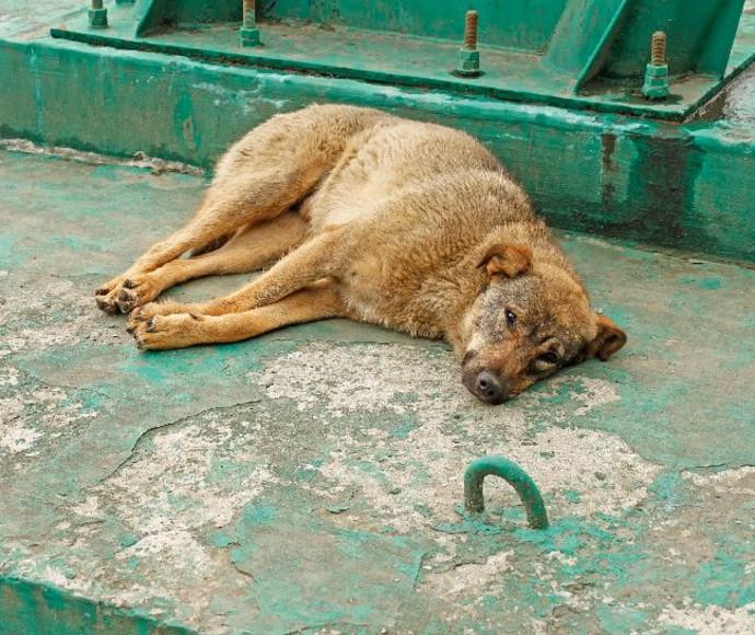 התעללות בכלבים