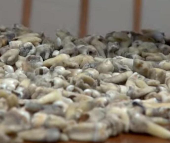 1,000 שיני אדם נמצאו בתוך קיר