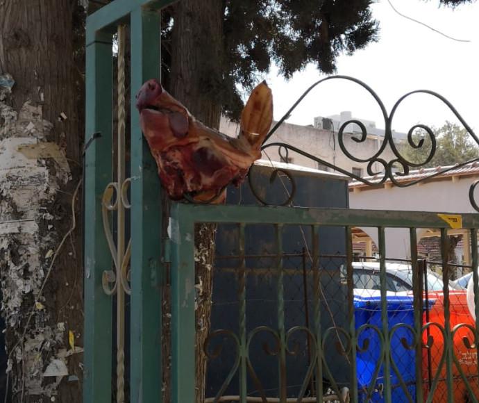 ראש חזיר בכניסה לבית כנסת ברמת השרון