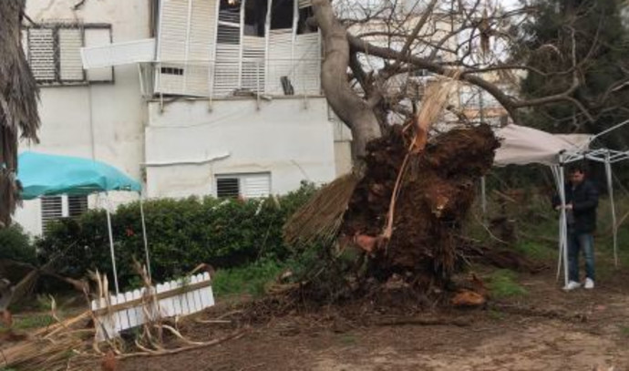 העץ שקרס על בניין בגבעתיים