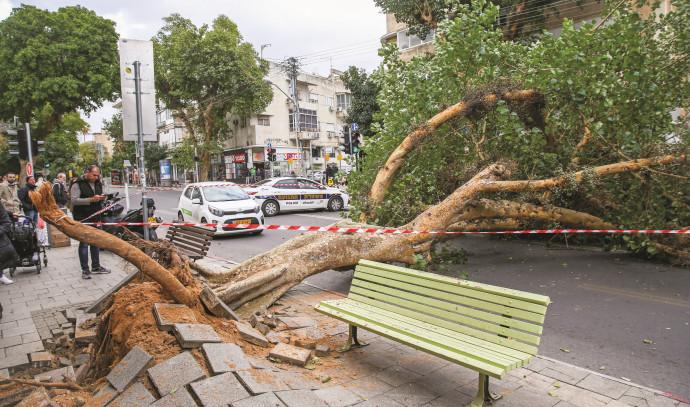 עץ שקרס בתל אביב בעקבות רוחות