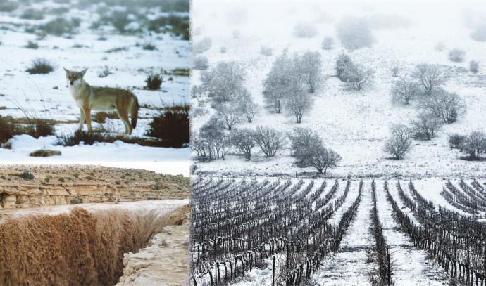 שלג ברמה, שלג במכתש רמון, שיטפון בנחל צין