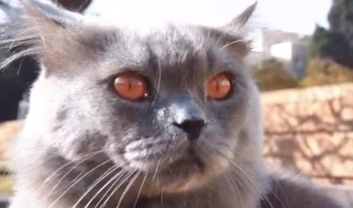 סרג' החתול