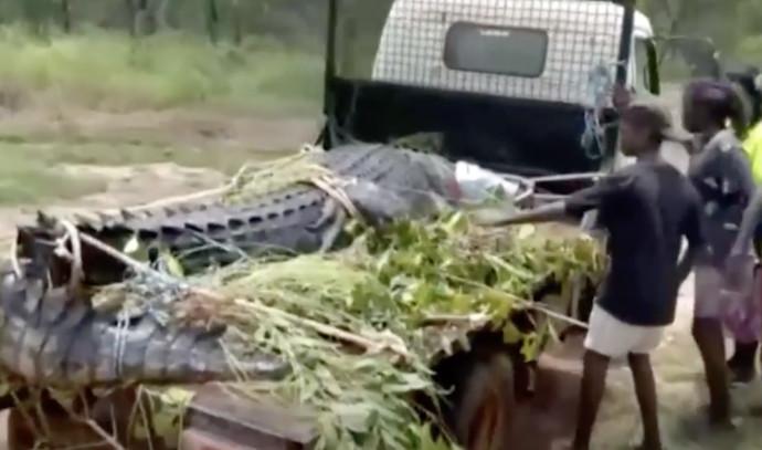 תנין ענקי נלכד באוסטרליה