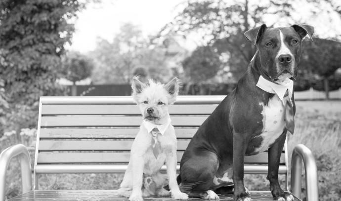 כלבים בחתונה