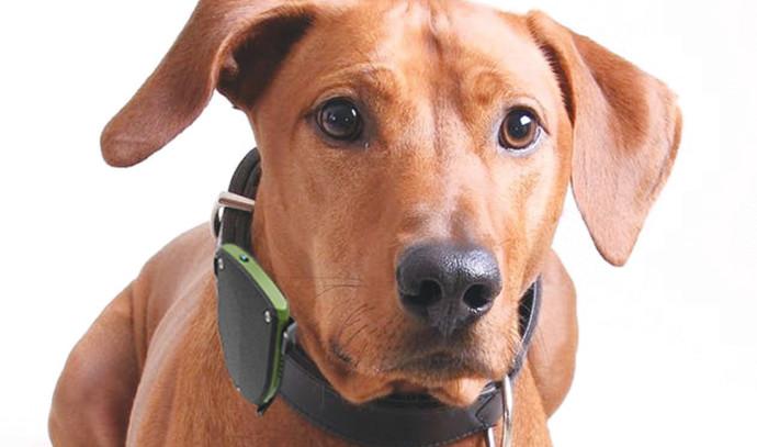 הקולר החכם של PET WATCH