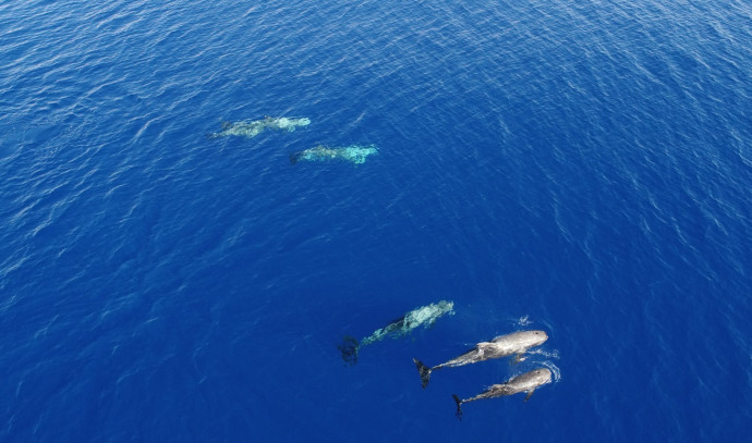 דולפינים במפרץ אילת