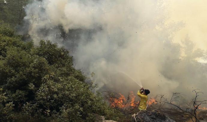 שריפת יער מטע
