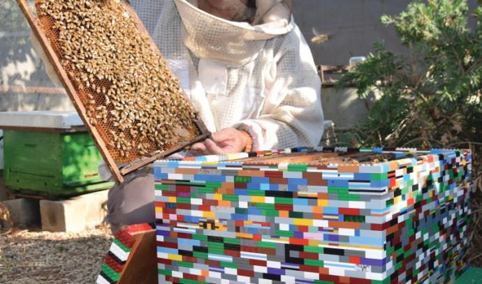 כוורת לגו בדבורת התבור