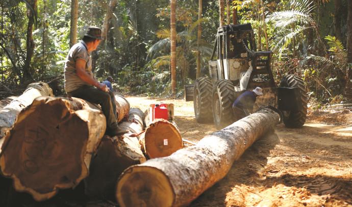כריתת עצים באמזונס