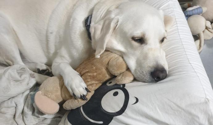 כלבה, אילוסטרציה (למצולמת אין רשא לנאמר בכתבה)